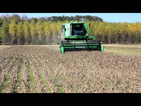 Soybean harvest on the KBS LTER