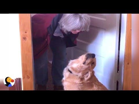 il-cane-che-rifiuta-i-bacini