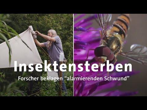 Insektensterben: Immer weniger Arten in Deutschland
