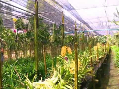 Bangkok Canal Tour + Thai Orchid Farm