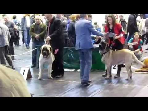 Brodnica National Dogs Show Poland 17.01.2015