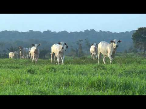 '.Rondônia: Exemplo na Agropecuária Sustentável.'