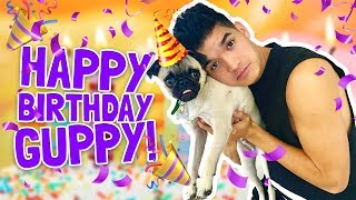 GET YOUR WASSABI MERCH NOW!http://www.AlexWassabi.comHAPPY BIRTHDAY GUPPY! Hope you had he best first birthday any DesPUGito has ever had in his entire life!Wassabi's MUST WATCH videos!: http://bit.ly/29yPBEHWatch every Wassabi CHALLENGE video!: http://bit.ly/29wKUeBNew Wassabi episode EVERY DAY!JOIN THE JOURNEY!Twitter: http://bit.ly/29A6ZIZInstagram: http://bit.ly/29NFnWrSecond Channel: http://bit.ly/2cU60JvFacebook: http://bit.ly/29LVthySnapchat: @RealAlexWassabiDon't forget to remember!If you're not smiling,YOU'RE DOING IT WRONG!! :)mKay bYe!
