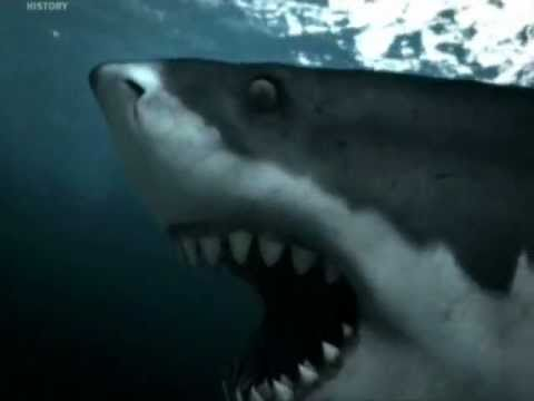 liopleurodon - My favorite 3 prehistoric sea monster: 3. Megalodon 2. Liopleurodon 1. Mosasaurus Song: Pain redefiend by Disturbed.