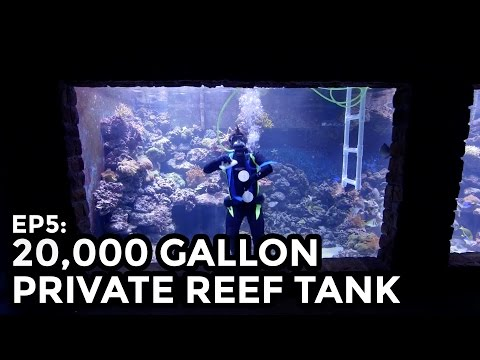 Guy builds his own 20 000 Gallon Reef Tank from