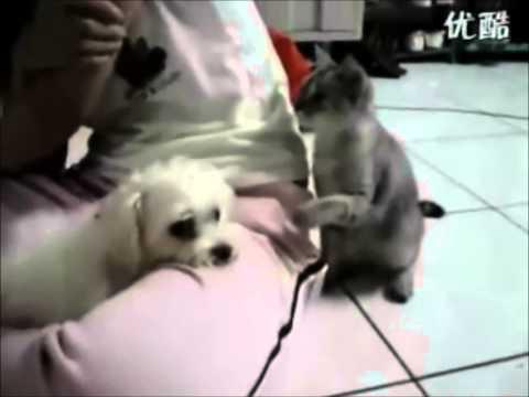 gatto cerca di diventare amico di un cane!
