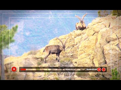 Cazavisión, el canal de los cazadores