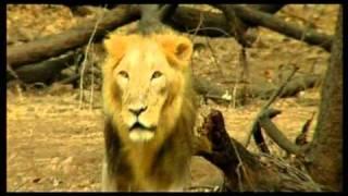 Akshar Travels .... Amitabh Bachchan @ kutch 1800 233 9008 full download video download mp3 download music download
