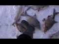 Видео - Шок! Словил браконьерскую сетку на крючок! Смотреть до конца! Рыбалка на льду