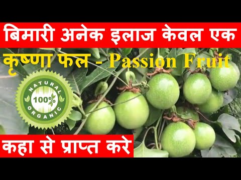 Order Organic Passion Fruit - आॅर्गेनिक कृष्णा फल या पेसन फ्रुट - कई बीमारीओ का एक इलाज