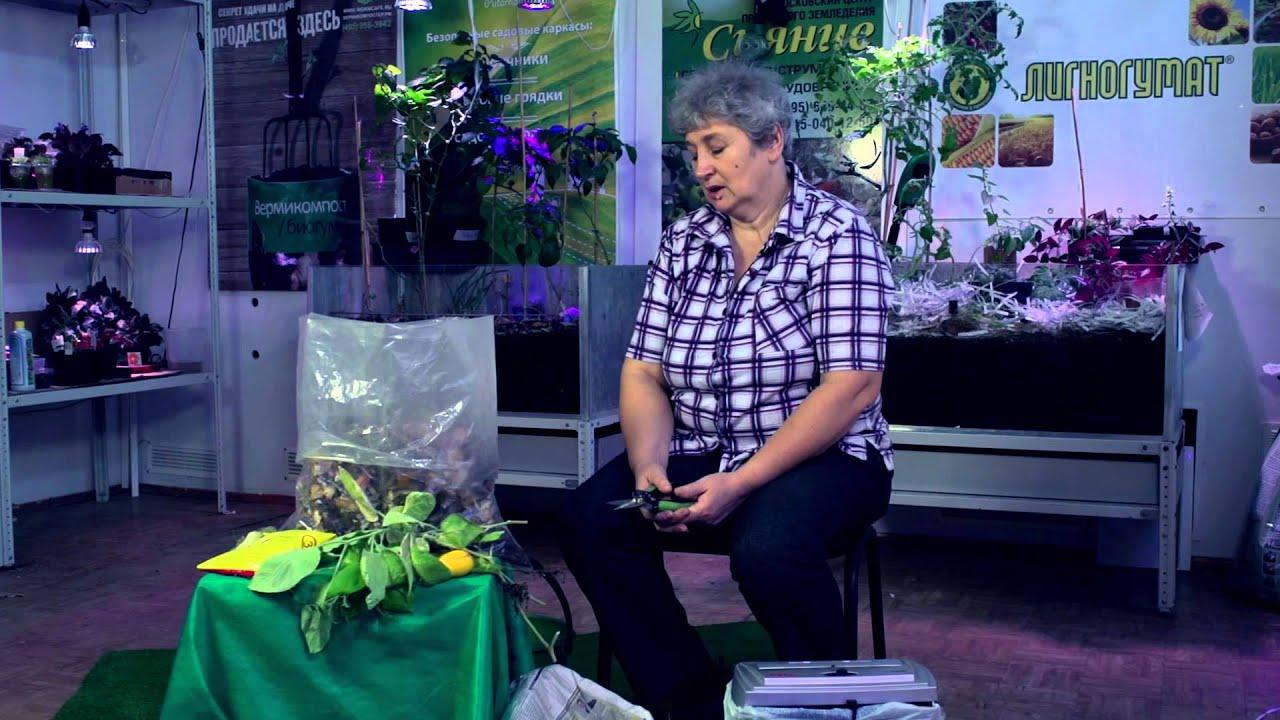 Смотреть онлайн:  Картофель. Добрый урожай. Выпуск 13