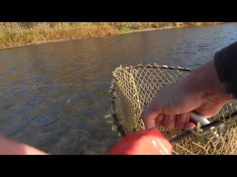 рыбалка в диких местах видео