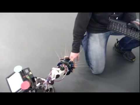 Ein Roboter, der von der etruskischen Spitzmaus inspiriert genannt Shrewbot