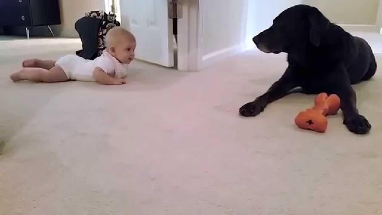 Baby's first crawl with her dog… what a cute ending!