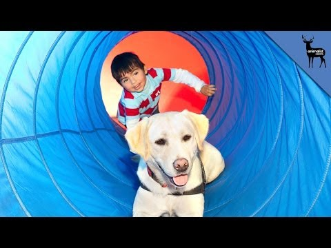 Why Do Dogs Help Children With Autism?