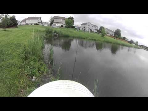 Pond Bass Fishing – June 11, 2014