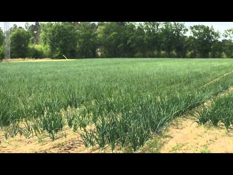 16 acres Cobbtown, GA