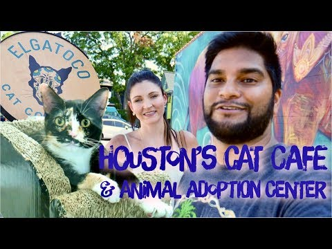 Houston's First Cat Cafe & Animal Adoption Center