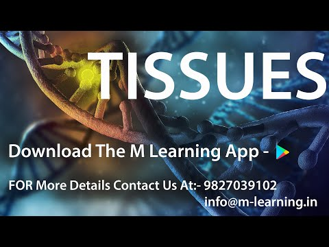 Tissues: Types of Animal Tissues - Epithelial, Muscular, Connecting, Nervous - 05 For Class 9th