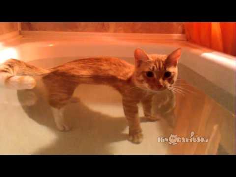 完全不怕水!超萌小貓愛泡澡!