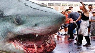 Video THE BIGGEST GREAT WHITE SHARKS Ever ! MP3, 3GP, MP4, WEBM, AVI, FLV Desember 2018