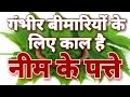 Neem ke patte ka fayda   नीम के पत्ते के फायदे   सुंदरता ही नही खतरनाक बीमारी के लिए है राम बाण
