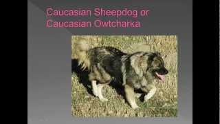 Dog breed name cross reference part 3-C