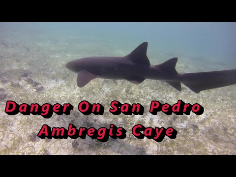 Hol chan Marine reserve, San Pedro, Belize_Diving destinations. Best of the week