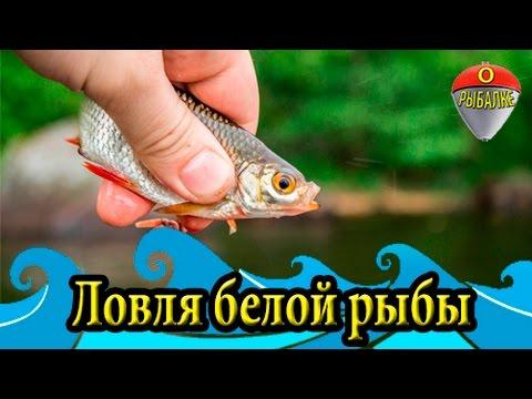 бесплатно ловля рыбы