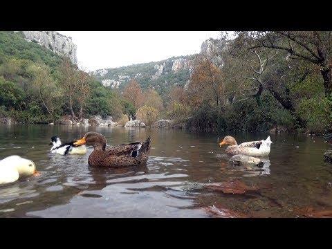 Gebze Ballıkayalar Tabiat Parkı