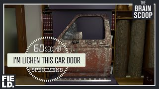 I'm Lichen this Car Door [60 Second Specimens] by The Brain Scoop