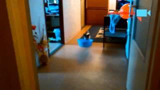 VIDEO DNE: Při kocovině je každá pomoc dobrá!