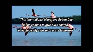 The last remaining tracts of mangrove forests are slowly getting destroyed from Mumbai and the Thane Creek. This will endanger the coastal city of Mumbai leaving it vulnerable to tsunamis and seismic waves. In this video we ask children from Mumbai and from the Tansa River Valley to voice their opinions on this issue as citizens of the future. The Tansa Valley is a predominantly tribal area located in the heart of the Western Ghats, about 70 km from Mumbai. Creeks and mangrove wetlands once destroyed allows the sea to enter the river, making it saline thus rendering it unfit for drinking or farming. Children from the Tansa valley being from the farming communities were aware of this disturbing fact, as is evident in the video.In addition to voicing their opinion on this issue, the children are seen appealing the concerned authorities viz. the Municipal Corporation of Greater Mumbai (MCGM), Mangrove Cell of the Maharashtra State Forest Department, Maharashtra State Pollution Control Board (MPCB), Maharashtra Coastal Zone Management Authority (MCZMA) and the Mumbai Police,  to protect the mangrove wetlands for a safe city.