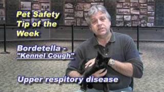 Kootenai Humane Society Pet Health/Safety Tip Of The Week 11-13-2009-Bordatella-Kennel Cough