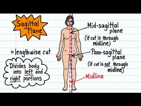 Anatomical Terms - Drawn & Defined (updated)