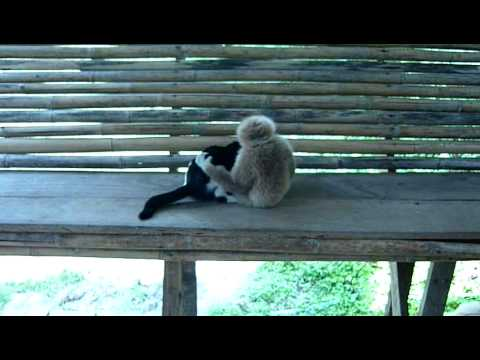 Cat and Spider Monkey Like to Monkey Around