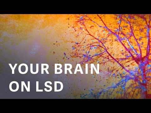 First Time Ever, Scientific Images Of Your Brain On LSD