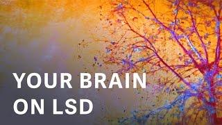 Neurologické súvislosti LSD zážitku
