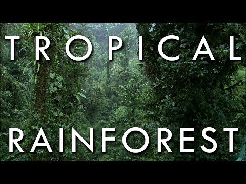 Tropical Rainforest - Secrets of World Climate #1