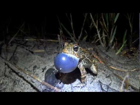A few of Florida's Frogs and Toads