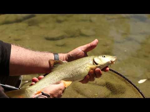 Feeder Fishing sul fiume Bidente (Tubertini)