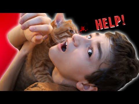 Мой кот ДО СИХ ПОР пытается меня убить -_- - DomaVideo.Ru