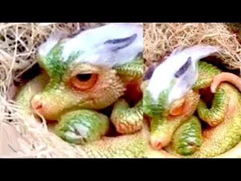 Những sinh vật kì lạ và bí ẩn nhất từng xuất hiện trên thế giới