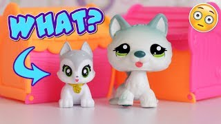 Video Are These Wannabe LPS? || Best Furry Friends Opening MP3, 3GP, MP4, WEBM, AVI, FLV Juni 2018