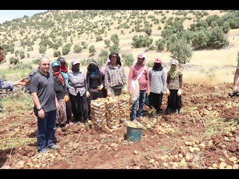Mardin'in Patates Ambarı Ömerli İlçesi Oldu