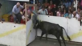 Zemsta byków