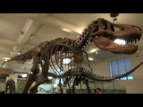 Amazing American Museum of Natural History in New York / From the Movie: Night at the Museum