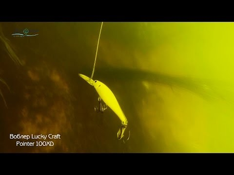 видео приманки под водой