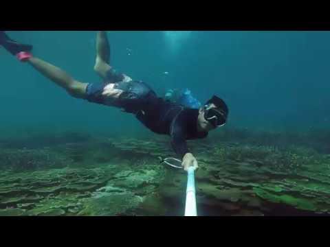??????| WA DIVING@????Scuba Diving_Búvárkodás. Heti legjobbak