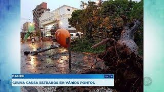 Chuva forte derruba árvores e causa estragos em Bauru